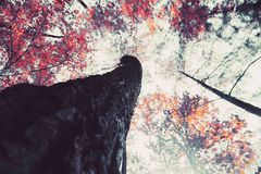 Albero di stagione di angolo basso in una foresta immagine stock