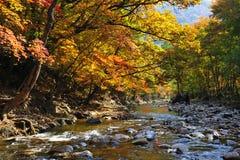 Albero di stagione di autunno Fotografia Stock