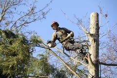 Albero di taglio del Arborist Immagini Stock Libere da Diritti