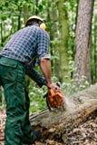 Albero di taglio del boscaiolo Fotografia Stock Libera da Diritti