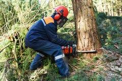 Albero di taglio del boscaiolo in foresta Fotografie Stock