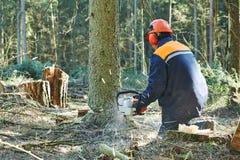 Albero di taglio del boscaiolo in foresta Immagine Stock