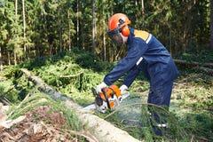 Albero di taglio del boscaiolo in foresta Fotografia Stock