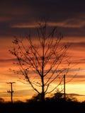 Albero di tramonto Fotografie Stock