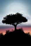 Albero di tramonto con la grande luna crepuscolare Fotografie Stock