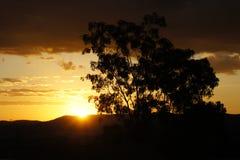 Albero di tramonto del paesaggio Fotografie Stock
