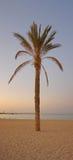 albero di tramonto di panorama della palma Immagine Stock