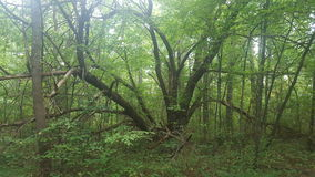 Albero di Treely Fotografia Stock Libera da Diritti