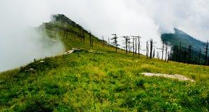 Albero diritto guasto, nubi ed alta montagna Immagini Stock