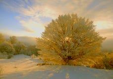 Albero dorato Fotografie Stock Libere da Diritti