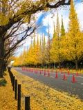 Albero dorato del ginkgo Fotografie Stock