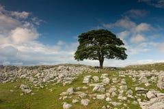 Albero in Dovengill Fotografia Stock Libera da Diritti