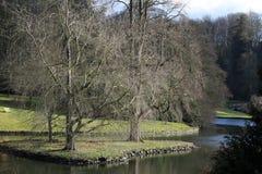 Albero due in un lago Fotografie Stock
