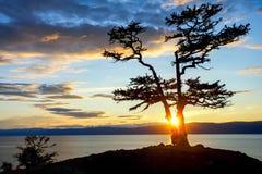 Albero durante il tramonto sul lago Baikal Fotografia Stock Libera da Diritti