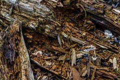 Albero duro distrutto e splittered fotografie stock libere da diritti