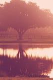 Albero e banco dal lago ad alba Fotografia Stock