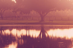 Albero e banco dal lago ad alba Fotografie Stock Libere da Diritti