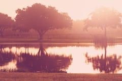 Albero e banco dal lago ad alba Fotografia Stock Libera da Diritti