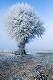 Albero e banco di paesaggio di inverno singoli immagine stock