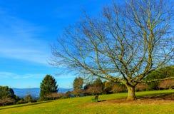 Albero e banco nudi il giorno caldo di autunno Fotografie Stock