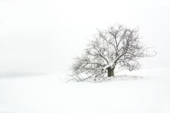 Albero e campo di inverno Immagini Stock