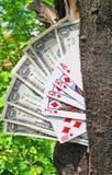 Albero e carte da gioco dei soldi Fotografie Stock