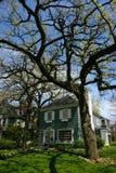 Albero e casa nella sosta della quercia Immagine Stock