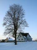 Albero e case piacevoli nei colori di tramonto, Lituania Immagine Stock