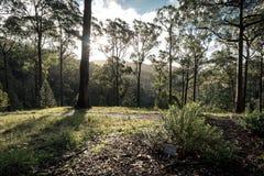 Albero e cespuglio ai giardini botanici alti del supporto Fotografie Stock