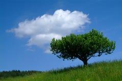 Albero e cielo Immagini Stock Libere da Diritti