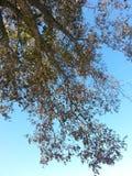 Albero e cielo Fotografia Stock Libera da Diritti