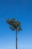 Albero e cielo blu Fotografie Stock Libere da Diritti