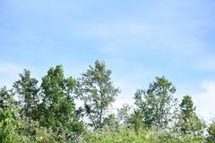 Albero e cielo blu fotografia stock libera da diritti