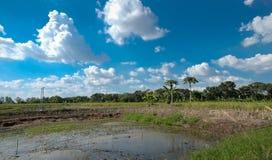 Albero e cielo blu dello stagno Fotografie Stock Libere da Diritti