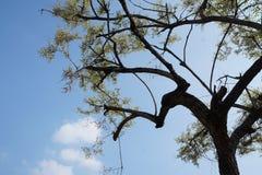 Albero e cielo blu neri fotografia stock libera da diritti