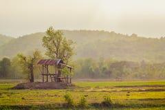 Albero e cielo del campo Fotografia Stock