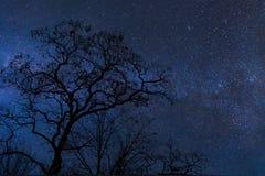 Albero e cielo notturno Fotografia Stock Libera da Diritti