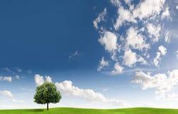 Albero e cloudscape Immagini Stock Libere da Diritti