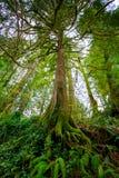 Albero e felci in foresta Fotografia Stock