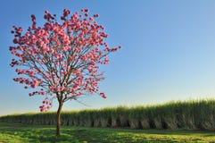 Albero e fiori Fotografie Stock