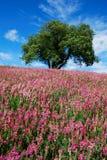 Albero e fiori Fotografia Stock