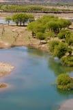 Albero e fiume Fotografie Stock