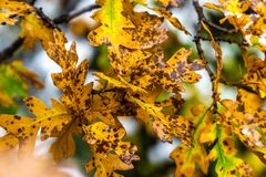Albero e foglie durante l'autunno di caduta dopo pioggia fotografie stock libere da diritti