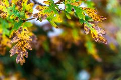 Albero e foglie durante l'autunno di caduta dopo pioggia fotografia stock libera da diritti