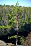 Albero e foresta pittoresca Fotografia Stock