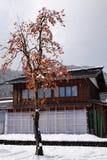 Albero e frutti di diospyros kaki al villaggio di Shirakawa Fotografia Stock Libera da Diritti