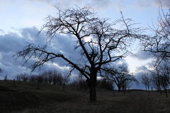 Albero e giardino Fotografia Stock
