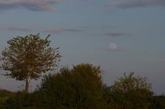 Albero e la luna Immagine Stock Libera da Diritti