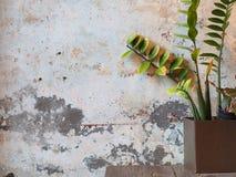 Albero e la parete di lerciume Fotografia Stock Libera da Diritti