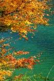 Albero e lago Immagine Stock